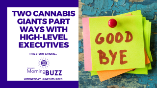 TWO CANNABIS GIANTS PART WAYS WITH HIGH LEVEL EXECUTIVES   TRICHOMES Morning Buzz