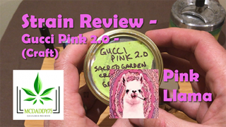 Gucci Pink 2.0 - (Craft) - From Pink Llama (sourced from Sacred Gardens Craft) (grower - Captains Pink) - Strain Review