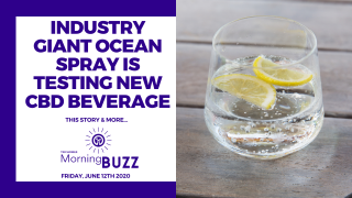 INDUSTRY GIANT OCEAN SPRAY IS TESTING A NEW CBD BEVERAGE | TRICHOMES Morning Buzz