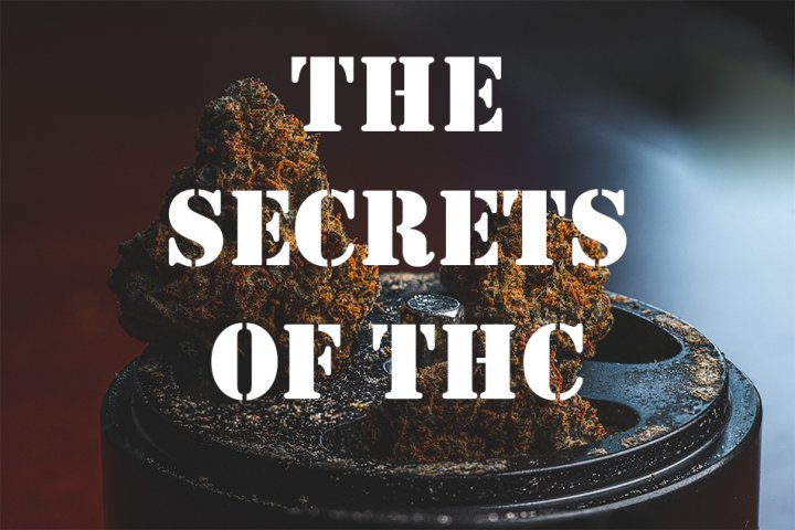 How THC Works - The Science of Getting High (Episode 2)