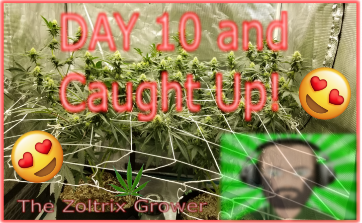 Day 10 of Flower   Canopy Filling up Fast   Mars Hydro Grow   TWTGC
