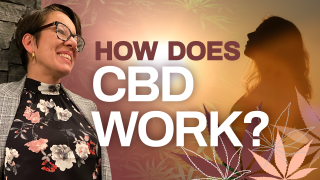 What Does CBD Do in the Body (How Does CBD Work?)