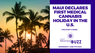 MAUI DECLARES FIRST MEDICAL CANNABIS HOLIDAY IN THE U.S. | TRICHOMES Morning Buzz