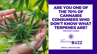NEW STUDY SAYS 70% OF CANNABIS CONSUMERS DO NOT KNOW WHAT A TERPENE IS | TRICHOMES Morning Buzz
