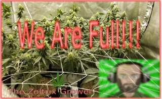 We're Full! | Day 16 of Flower | Growing Under Mars Hydro | TWTGC
