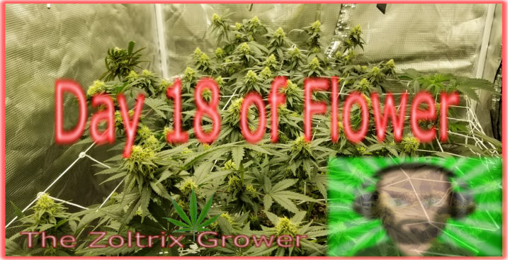 Day 18 of Flower | How Monsters Are Grown | Growing Under Mars Hydro | TWTGC