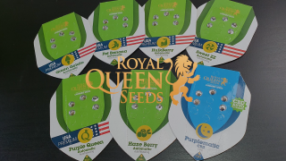 Unboxing Royal Queen Seeds