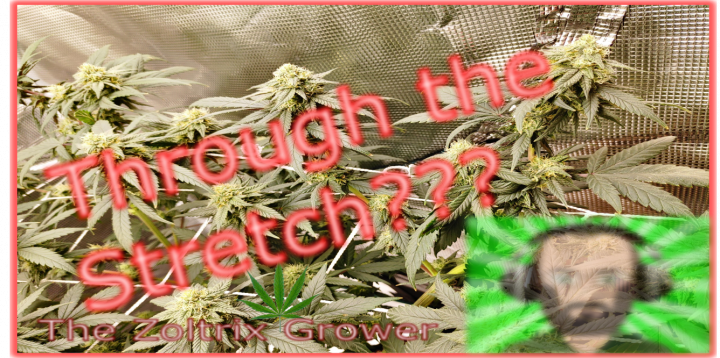 Almost Through the Stretch | Day 19 of Flower | Growing Under Mars Hydro | TWTGC