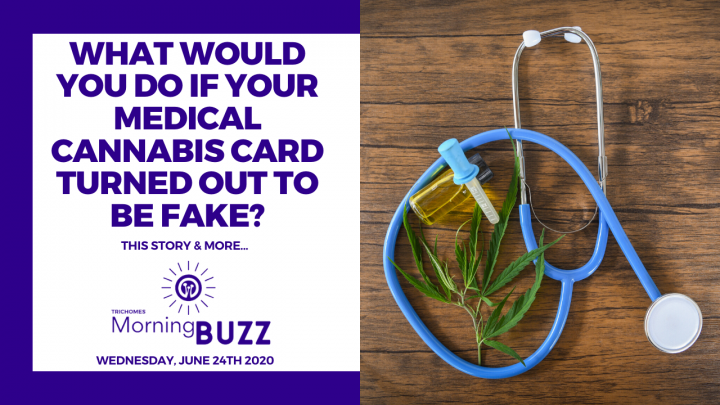 WHAT WOULD YOU DO IF YOUR MEDICAL CANNABIS CARD WAS FAKE? | TRICHOMES Morning Buzz
