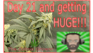 Day 21 of Flower | Stroll through the Garden | Growing Under Mars Hydro | TWTGC