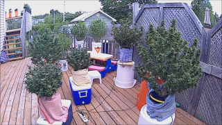 Outdoor Grow Project 2020