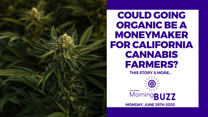 COULD GOING ORGANIC BE A MONEYMAKER FOR CALIFORNIA CANNABIS FARMERS? | TRICHOMES Morning Buzz
