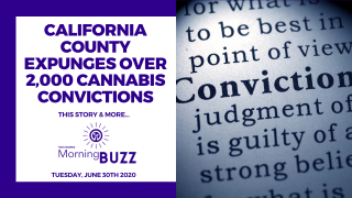 CALIFORNIA COUNTY EXPUNGES OVER 2000 CANNABIS CONVICTIONS | TRICHOMES Morning Buzz