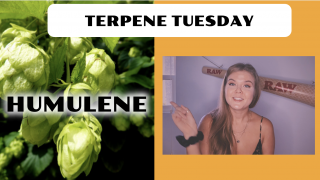 Humulene Terpene Effects | Terpene Tuesday (Epi.6)