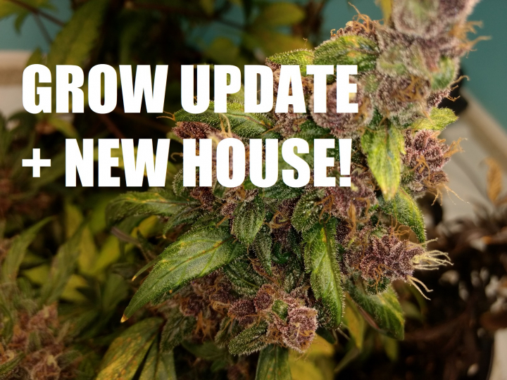 UPDATE ON GROWS + NEW HOUSE SOON!