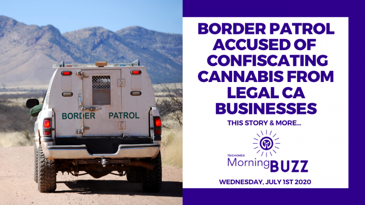 BORDER PATROL ACCUSED OF CONFISCATING CANNABIS FROM LEGAL CA BUSINESSES | TRICHOMES Morning Buzz