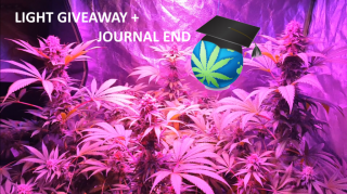 Mars LED GIVEAWAY + Lex's Grow Journal CONCLUSION