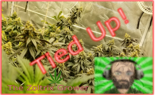 Tied Up | Day 28 of Flower | Growing Under Mars Hydro | TWTGC
