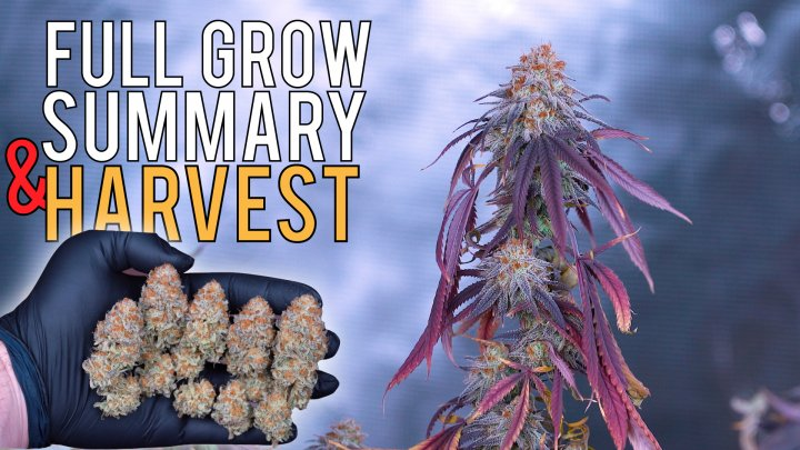 HOW TO GROW WEED EASY (PHOTOPERIODS) FULL GROW SUMMARY & HARVEST RESULTS | 680W 5X5