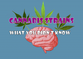 Cannabis Strains- What You Didn't Know