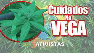 CULTIVO CANNABIS Ep. 7 - Cuidados na Vega (Care in Vegation)