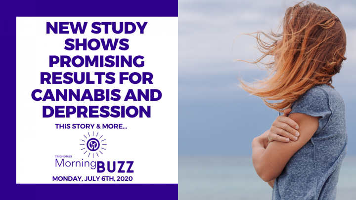 NEW STUDY SHOWS PROMISING RESULTS FOR CANNABIS AND DEPRESSION | TRICHOMES Morning Buzz