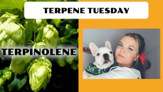 Terpinolene Terpene Effects | Terpene Tuesday (Epi.7)