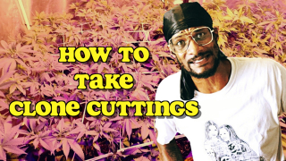 How To Take Clone Cuttings
