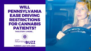 WILL PENNSYLVANIA EASE DRIVING RESTRICTIONS FOR CANNABIS PATIENTS? | TRICHOMES Morning Buzz