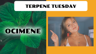 Ocimene Terpene Effects | Terpene Tuesday (Epi.8)