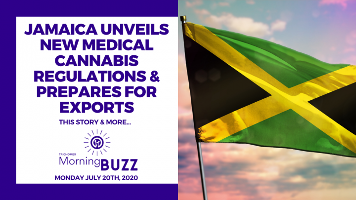 JAMAICA UNVEILS NEW MEDICAL CANNABIS REGULATIONS & PREPARES FOR EXPORTS   TRICHOMES Morning Buzz