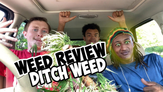 WEED REVIEW: DITCH WEED