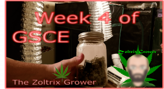 Week 4 Garden Update | Changes Made All Around | TWTGC | Growing with Mars Hydro