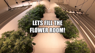 Lets fill the Flower Room! / Mars Hydro SP 250