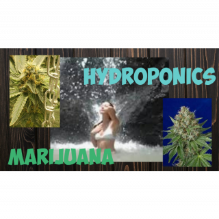I look around my growroom talk and what my hydroponics
