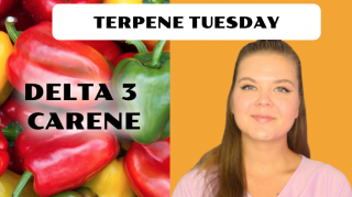 Delta 3 Carene Terpene Effects | Terpene Tuesday (Epi.10)