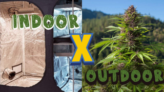 INDOOR X OUTDOOR