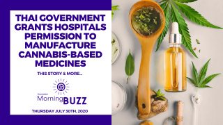 THAI GOVERNMENT ALLOWS HOSPITALS TO MANUFACTURE CANNABIS-BASED MEDICINES | TRICHOMES Morning Buzz