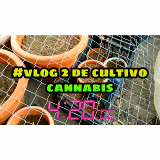 #Vlog 3 de CULTIVO de CANNABIS  in spanish #weedcultor