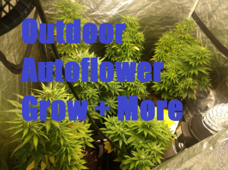 Cannabis Autoflower  Grow Update. Results and More!
