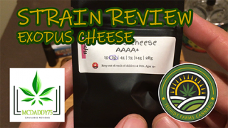 Exodus Cheese from Tegridy Farms Cannabis - Strain Review