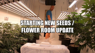 Starting New Seeds / Flower Update / Mars Hydro SP 250