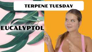 Eucalyptol Terpene Effects | Terpene Tuesday (Epi.12)