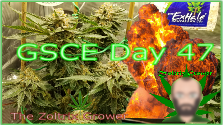 GSCE Day 47/27 Update | We Got Mail!!! | Organic Preparations | TWTGC | Growing Under Mars Hydro