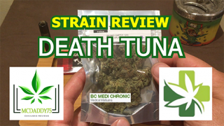 Death Tuna from BC Medi Chronic - Strain Review