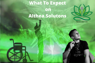 What To Expect From Trannabis Chi On Althea.Solutions