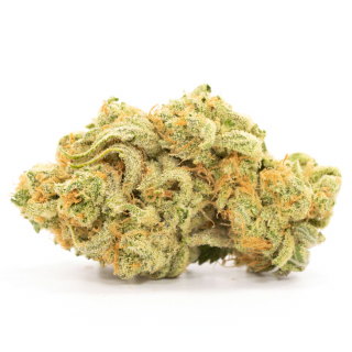 Da Kitchen Couch Reviews - Zombie OG from BC Bud Supply