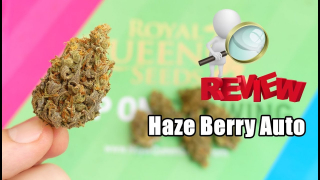 HAZE BERRY AUTO REVIEW