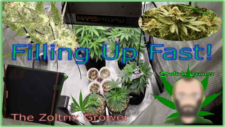 Filling Up! | GSCE Day 54 and 34 of Flower | Something New Starting! | TWTGC