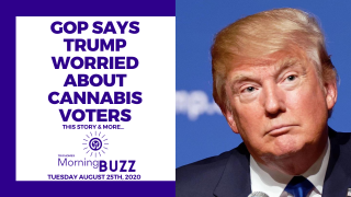 GOP SAYS TRUMP IS WORRIED ABOUT CANNABIS VOTERS | TRICHOMES Morning Buzz